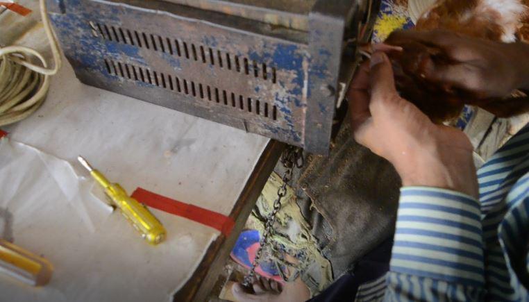 মুরগির ঠোঁট ছ্যাঁকা (ঠোঁট কাটা) হয় যেভাবে দেখুন...বিক ট্রিমিং (Beak trimming)