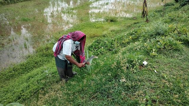রাজশাহী-নওগাঁ সড়কে এক লাখ তাল গাছ রোপণ করেছেন বেলাল